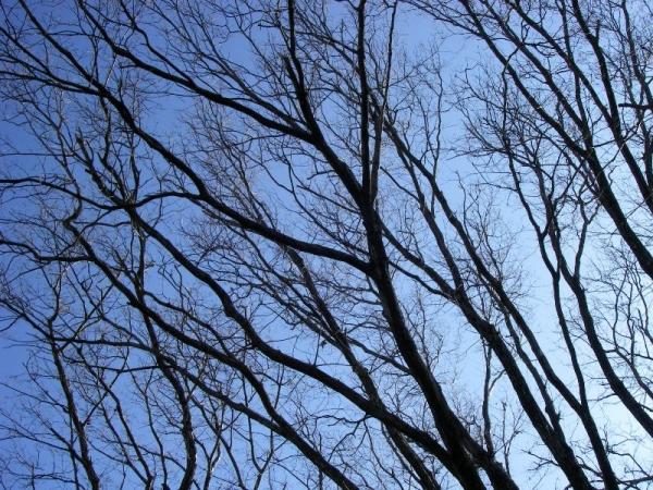 s140114樹木