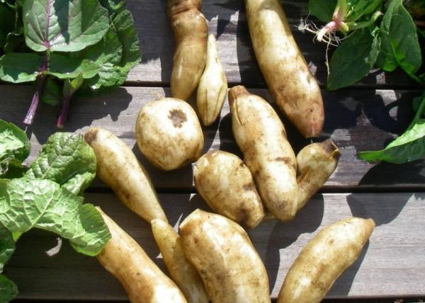 s140112冬野菜2