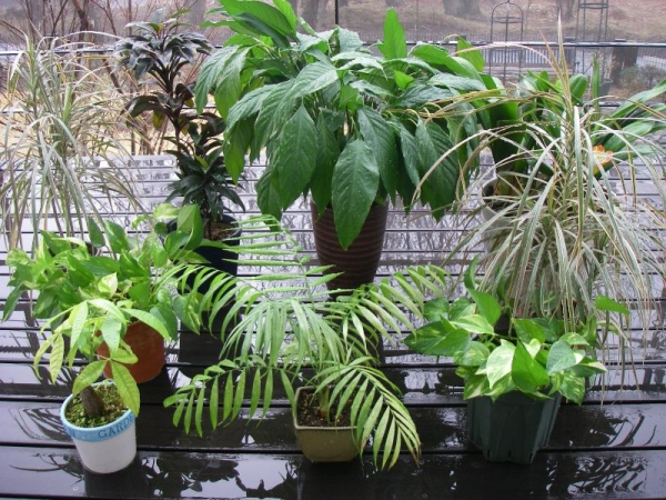 s140202植物