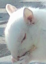 albinosquirrel4.jpg