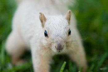 albinosquirrel7.jpg