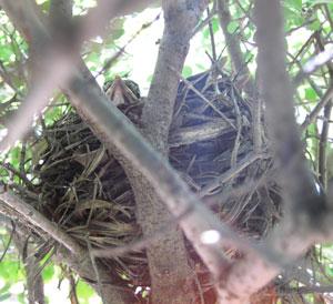 nest102.jpg