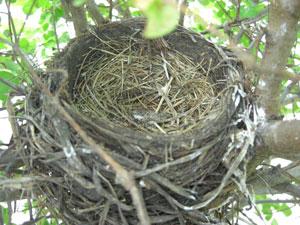 nest105.jpg