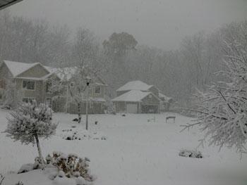 snow1113101.jpg