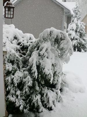 snow1113104.jpg