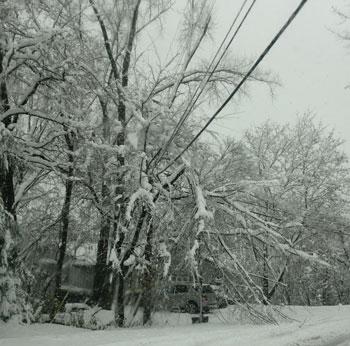 snow1113107.jpg