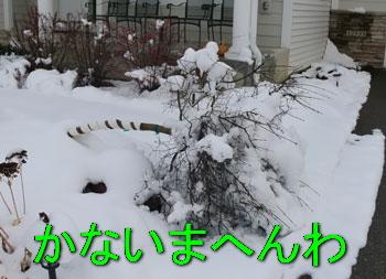 snow1114104.jpg