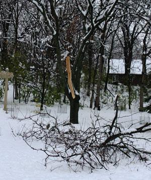 snow1114105.jpg