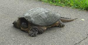turtle0813101.jpg