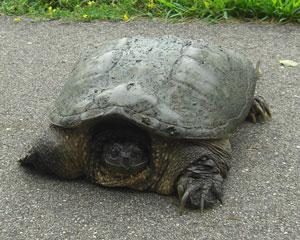 turtle0813102.jpg