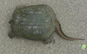 turtle0813103.jpg