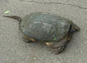 turtle0813104.jpg