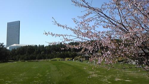 2宮崎桜 (2)