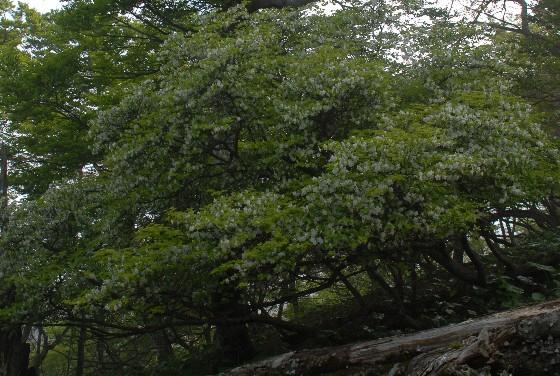 20100606-12.jpg