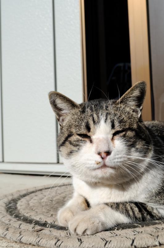 野良猫だから、ノラ