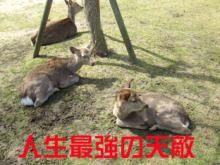 雪麿Lounge-奈良鹿