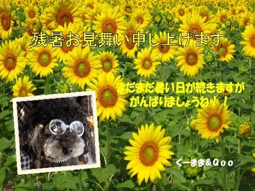 2011,お見舞い_R