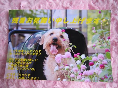 IMG_2852_R.jpg
