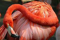 200px-Lightmatter_flamingo2.jpg