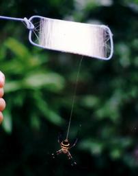クモの糸集め