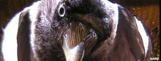 ins nest schauen klein