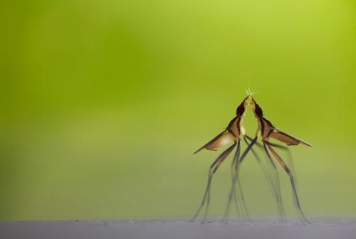 insektentanz klein