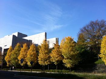 国会議事堂とイチョウ並木
