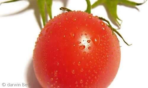 1003トマト
