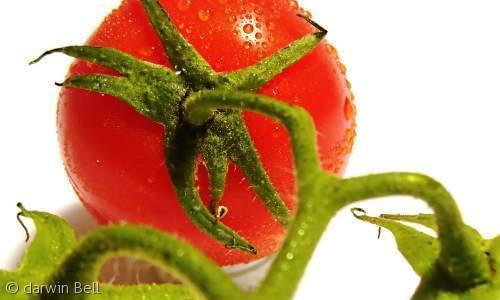 751トマト