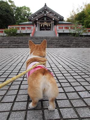 神祇神社1