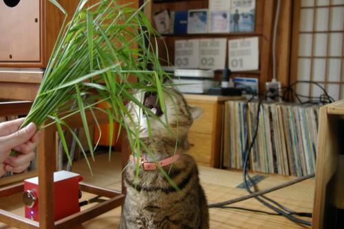 ぴっぴと草その1