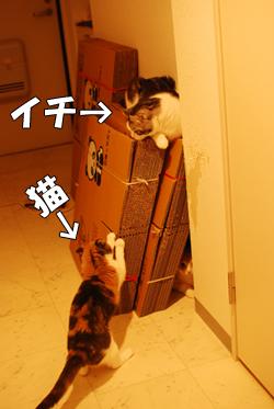猫邪魔&イチ邪魔。