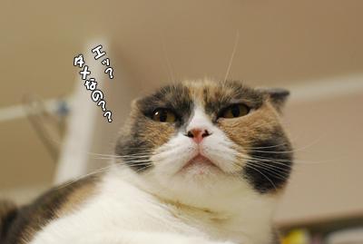 猫なりのサービス。