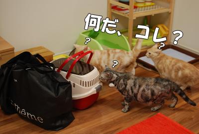 不審物発見(☆Д☆)キラリーン♪