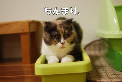 ちょこんと猫たん。