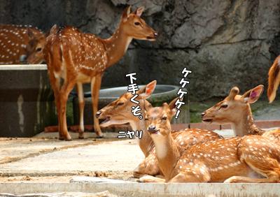 嫌な鹿ッ((o