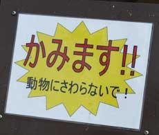 kitunezaru4.jpg