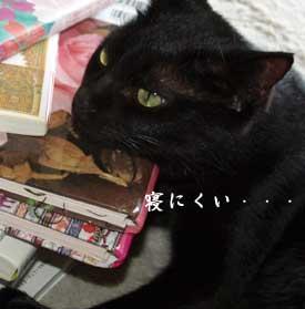 makuraoko_1010072.jpg