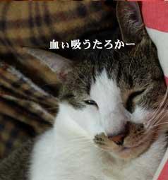 omihei1_101112.jpg
