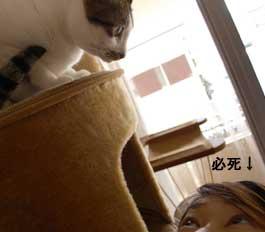 withomiso_3110303.jpg