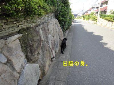 2011 06 23_8771