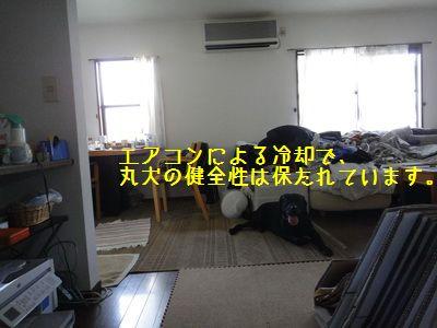 2011 06 23_8777