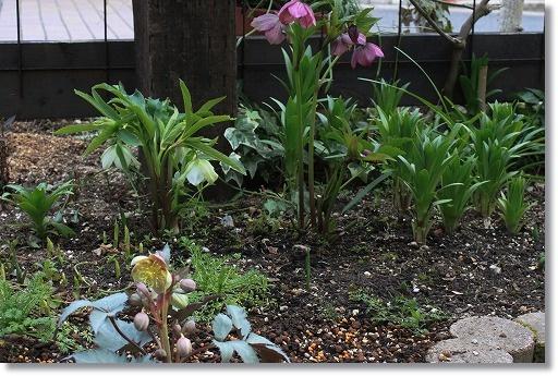 クリロー花壇