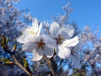 春爛漫-02