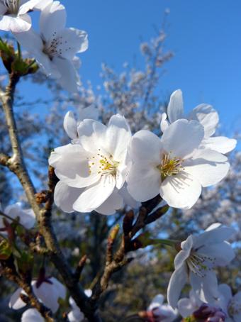 春爛漫-03