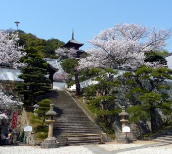 西国寺の桜01