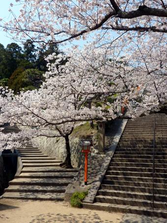 西国寺の桜02