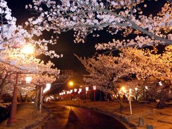 千光寺山の夜桜