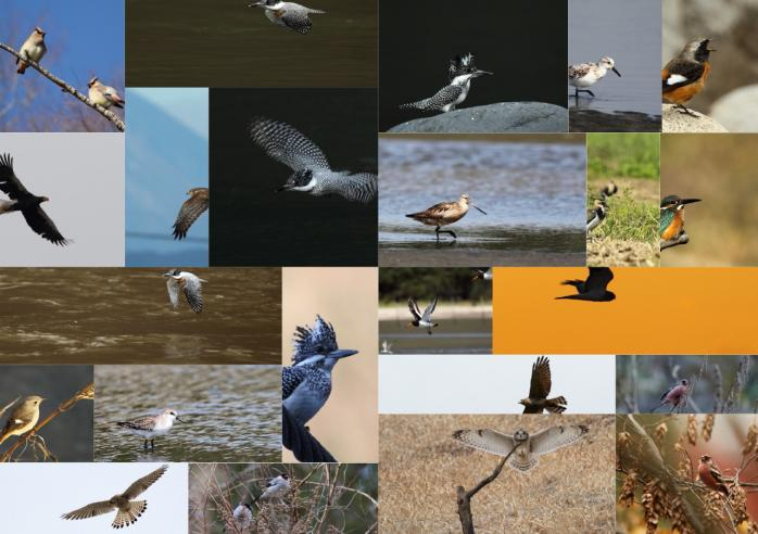 野鳥2011_1