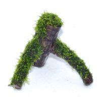 ローライマモス流木